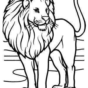 300x300 Adult Lion Drawing Outline Outline Of Lion Head Drawing. Lion