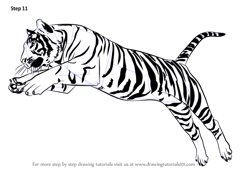 844x598 Learn How To Draw A Tiger Jumping (Big Cats) Step By Step