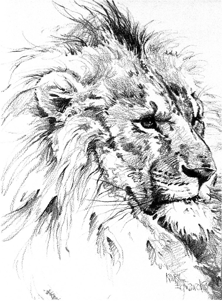 755x1024 Lion Amp Lioness Karl Edwards