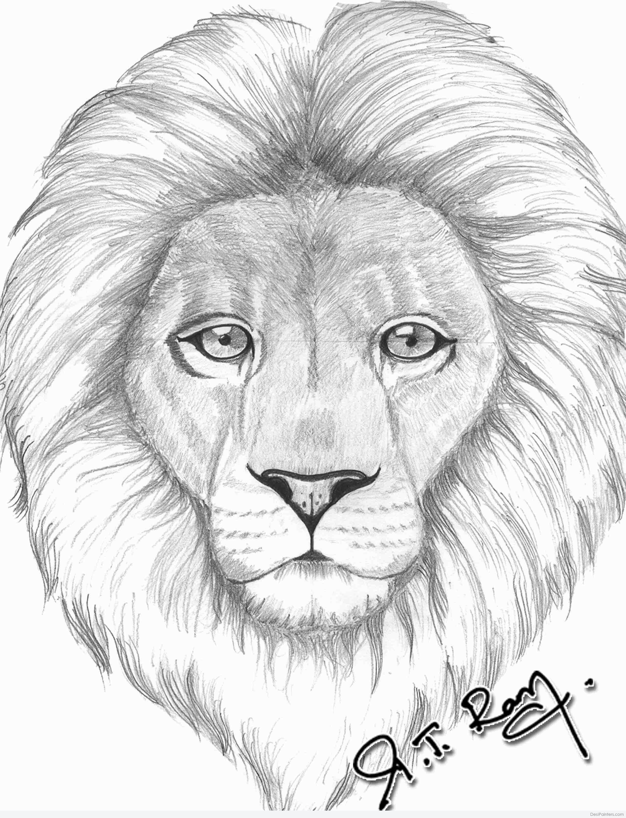 2550x3330 Pencil Sketch Of Lion