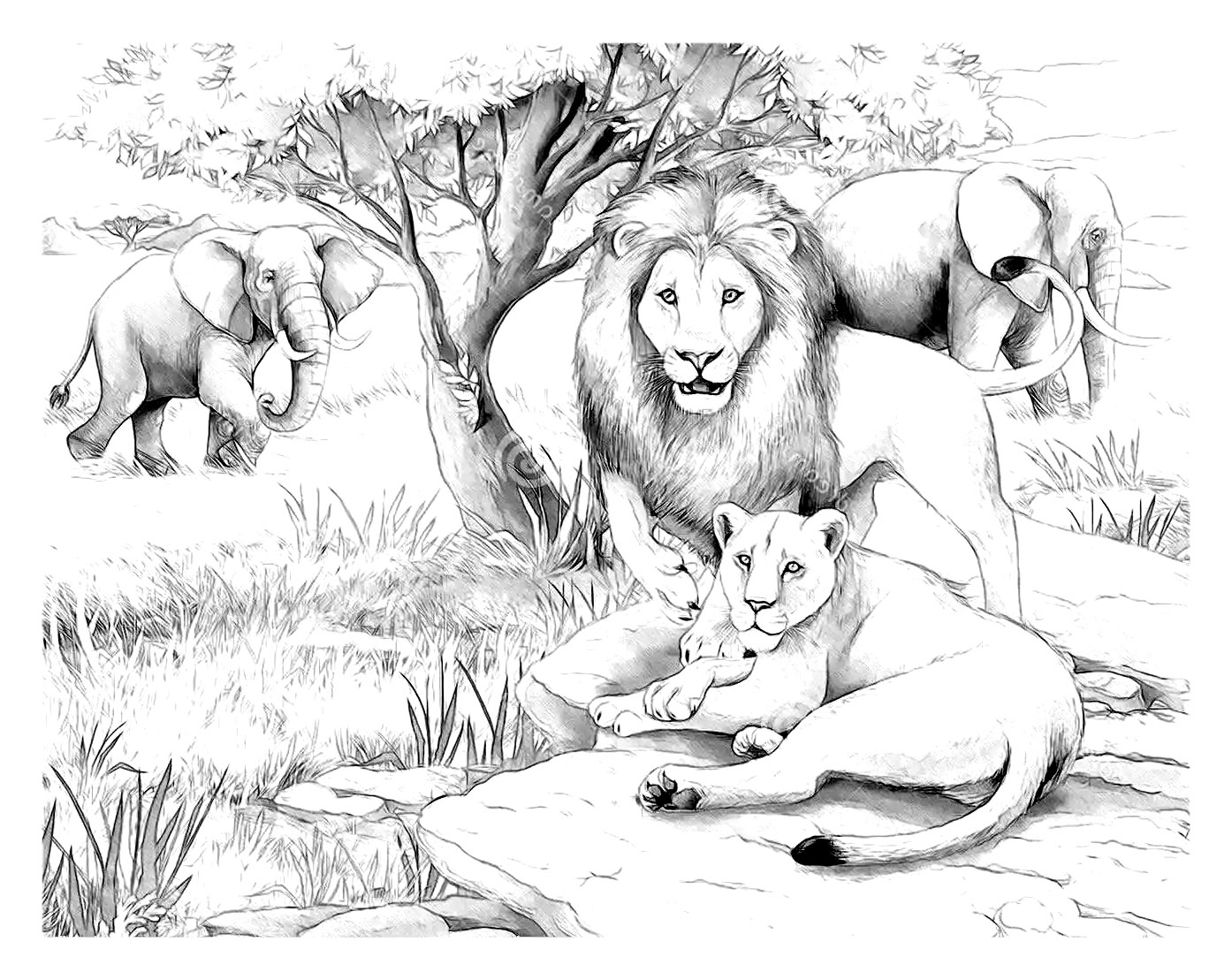 1394x1109 Africa Lions Africa