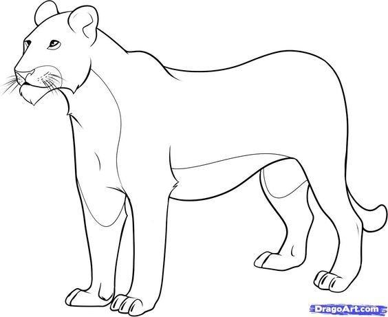 564x461 Female Lion Coloring Page