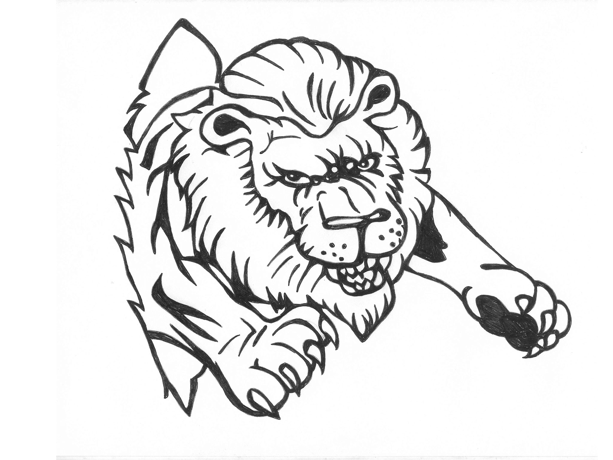 2048x1536 Gallery Free Lion Drawings,