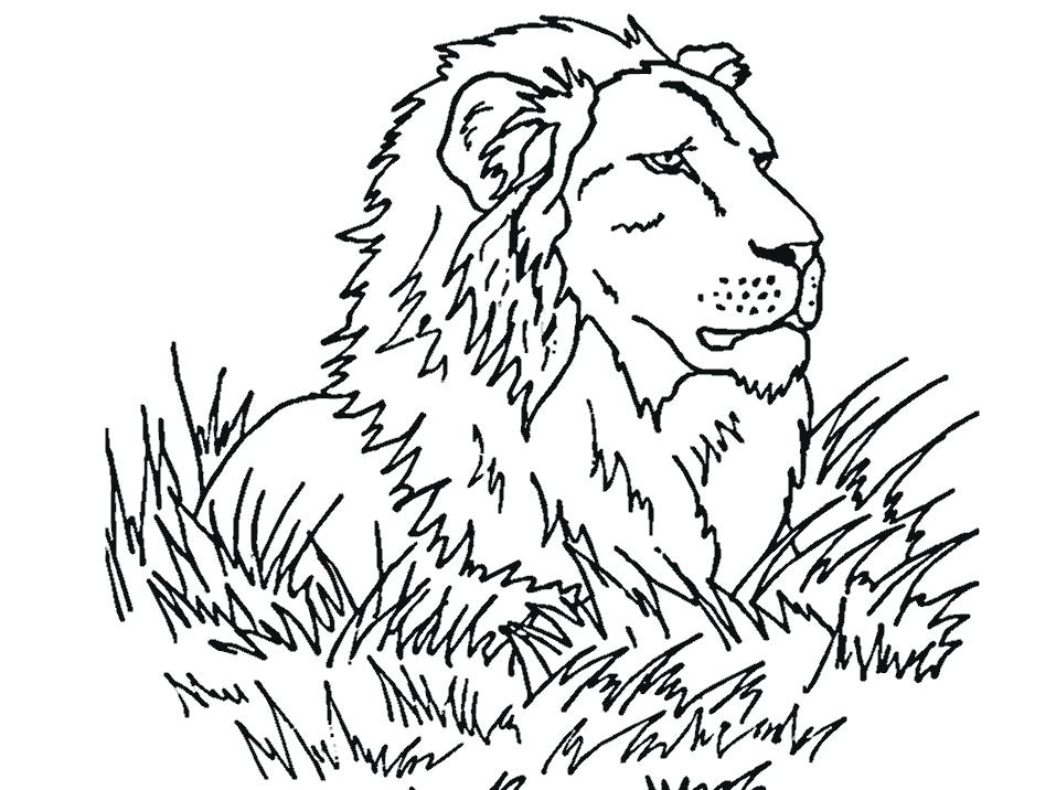957x716 Lion Coloring Book