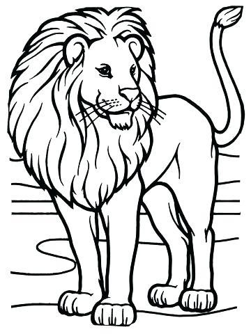 360x480 Lion Coloring Page