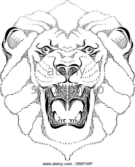 438x540 Lion Roar Black And White Stock Photos Amp Images