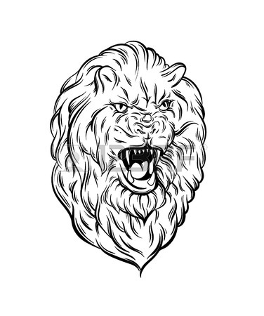 376x450 Vector Illustration Of Realistic Lion Made In Hand Sketched Style