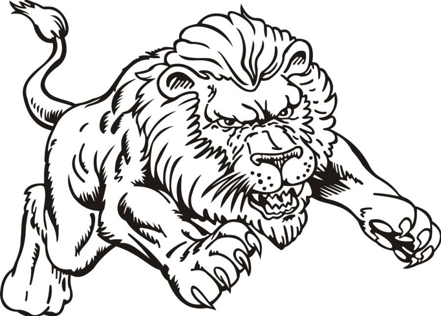 900x645 Delighted Coloring Picture Of A Lion Growling Color Page