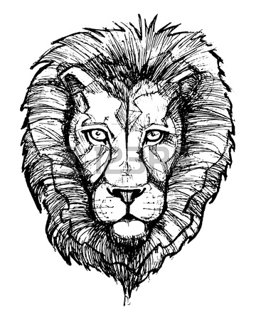 360x450 Hand Drawn Vector Illustration Or Drawing Of A Lion Head Stock