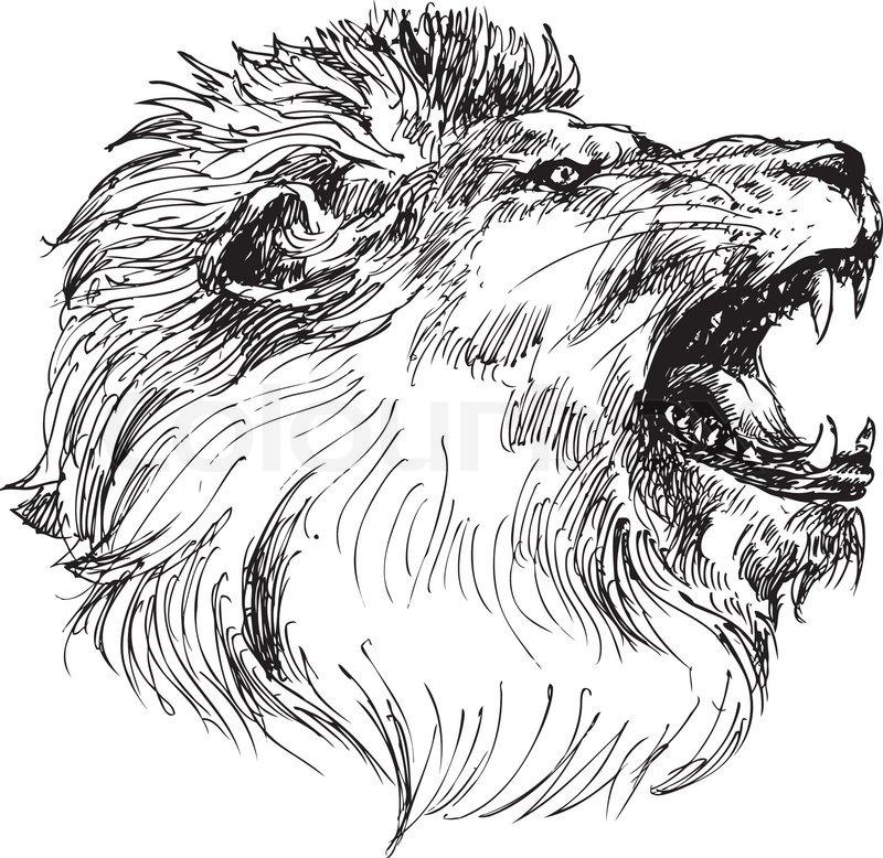 800x778 Hand Drawn Lion Head Stock Vector Colourbox