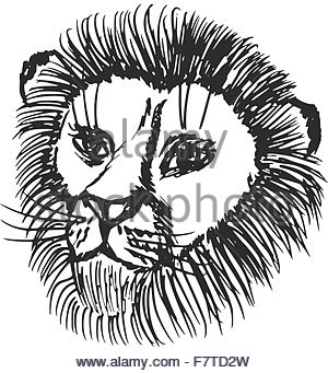 300x341 Hand Sketch Of Lion Head With Mane. Lion Drawing And Animal Sketch
