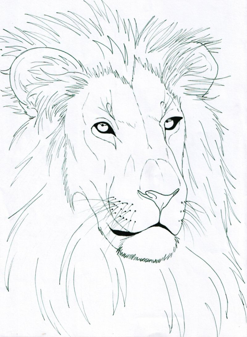 how to draw a realistic lion head step by step