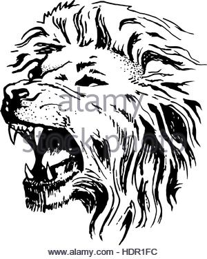 300x376 Sketch Of Lion Head With Mane. Lion Tattoo King. Vector