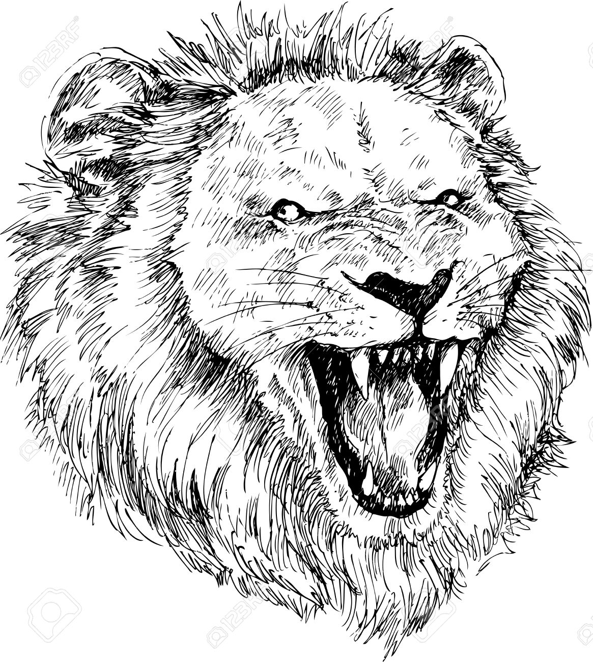 1165x1300 Hand Drawn Lion Head Royalty Free Cliparts, Vectors, And Stock