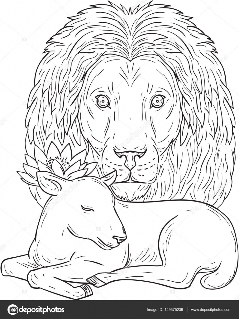 767x1024 Lion Watching Over Sleeping Lamb Drawing Stock Vector