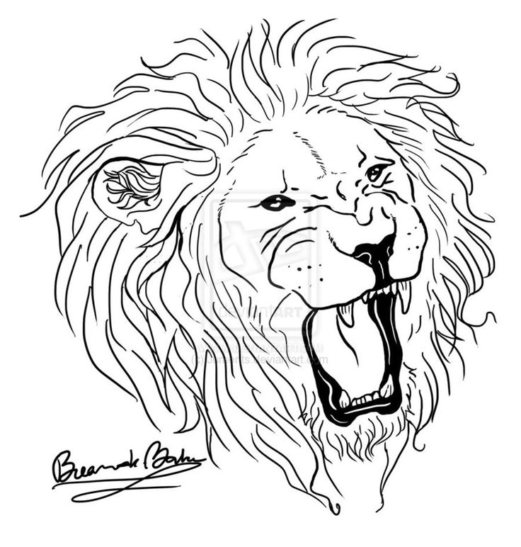 736x772 Download Lion Tattoo Line Drawing
