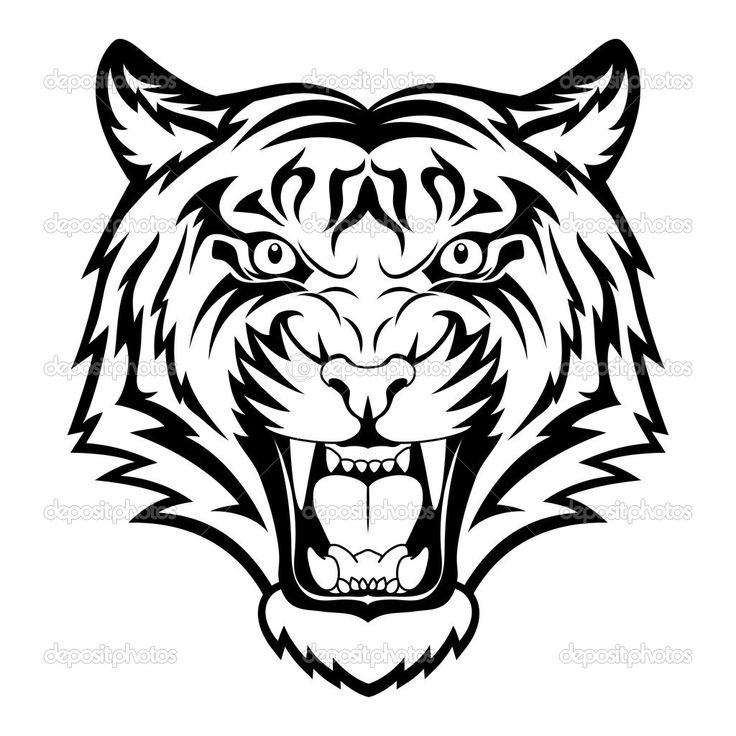 736x736 White Tiger Clipart Easy Draw