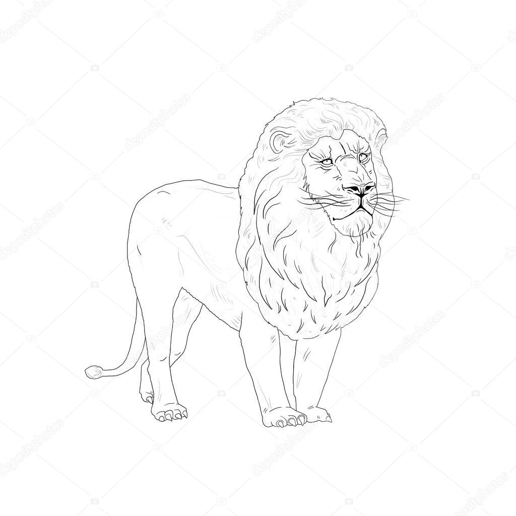 1024x1024 Lion King Sketch Stock Photo