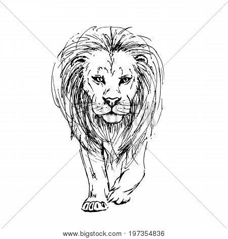 450x470 Front View Lion Images, Illustrations, Vectors