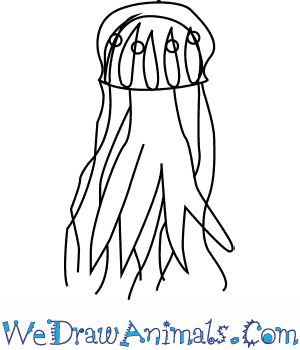 300x350 How To Draw A Lion's Mane Jellyfish