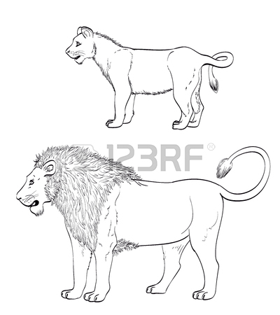 400x450 Lion Drawing. Mature Male Lion And Lionet On White. Vector