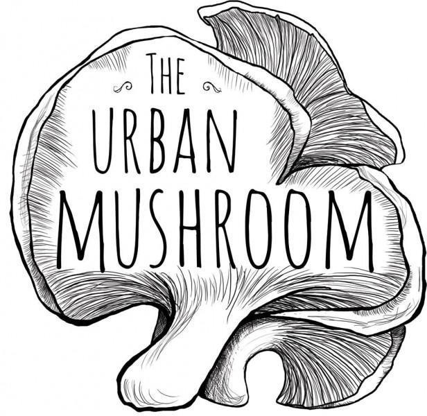 616x600 Lion's Mane Mushroom Drawing