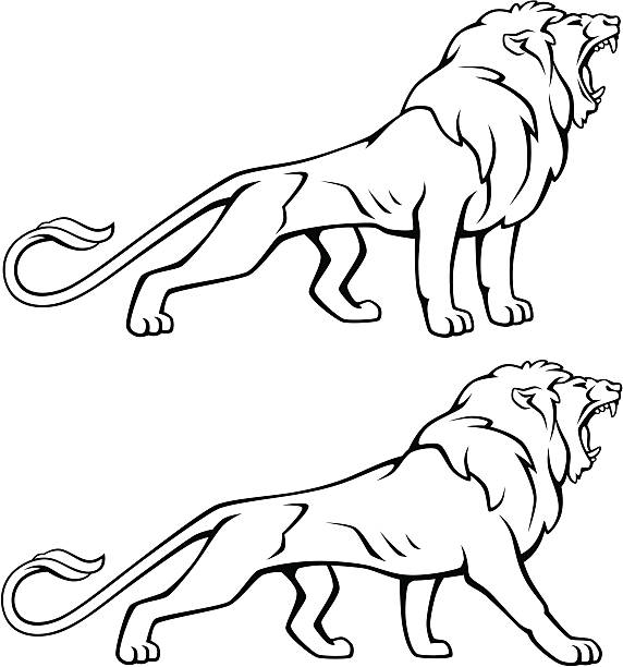 572x612 Clipart Lion Open Mouth Collection