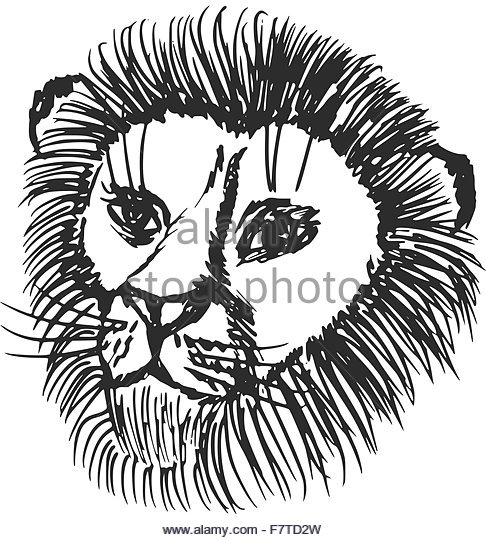 486x540 Lion Mouth Open Black And White Stock Photos Amp Images