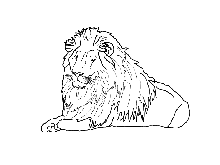 710x533 Lion Outline By Hiidee