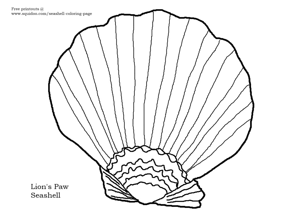 1024x768 New, Free Coloring Page Lion's Paw Seashell Seashells By Millhill