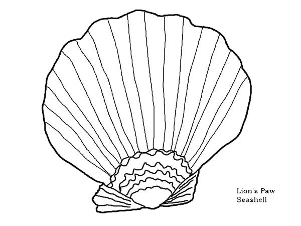 600x450 Beautiful Lions Paw Seashell Coloring Page
