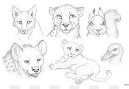 260x180 Free Download Drawing Lion Pencil Sketch