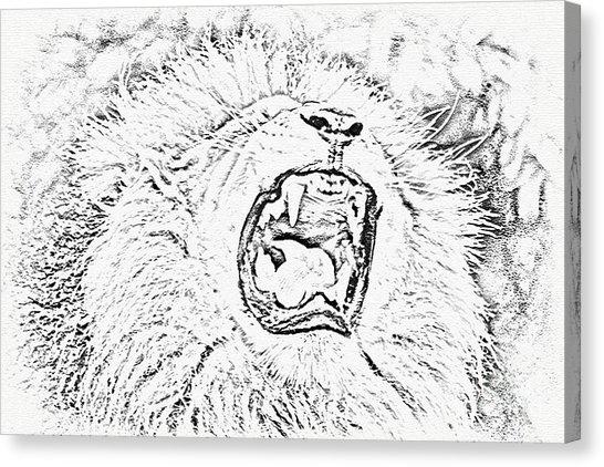 546x422 Lion Pencil Drawing Canvas Prints