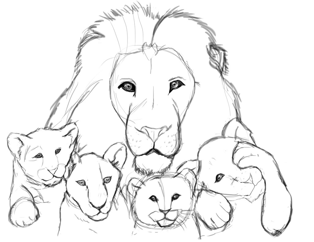 1024x791 Lion Sketch By Drawcolorful