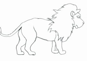 300x210 Pencil Art Sketch Drawings Beginners Of Lions How To Draw A Lion
