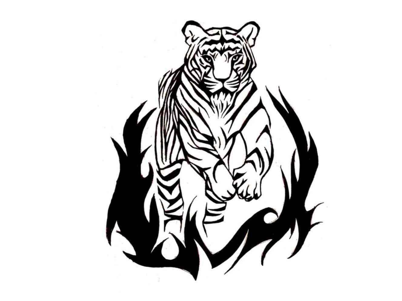 1327x995 Lion Drawings Of Tribal Tigers And Tiger Tattoo Set Photos