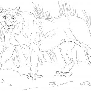 300x300 Lion Pride Coloring Pages Best Of Lion King Coloring Pages Best