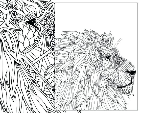 570x457 Interesting Ideas Lion Coloring Pages For Adults Realistic New