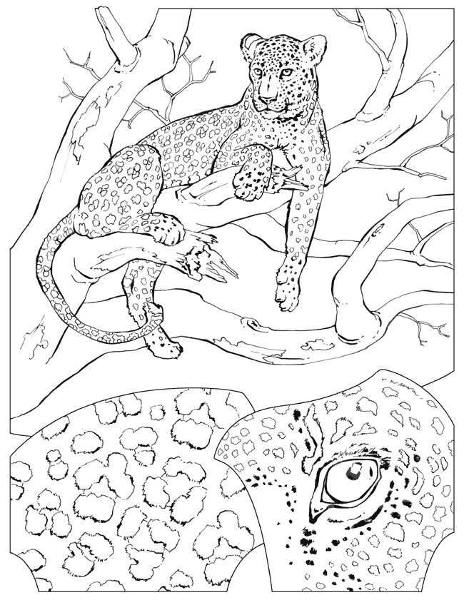 650x841 54 Best Big Cats Images On Pyrography, Draw Animals