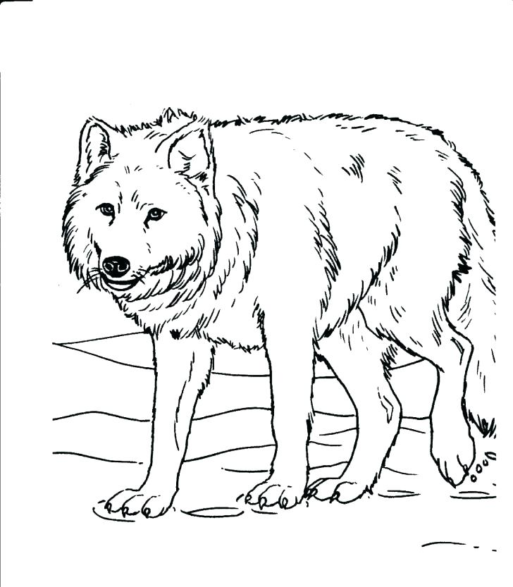 728x833 Coloring Pages Animals Realistic Colouring Pages For Ocean Animals