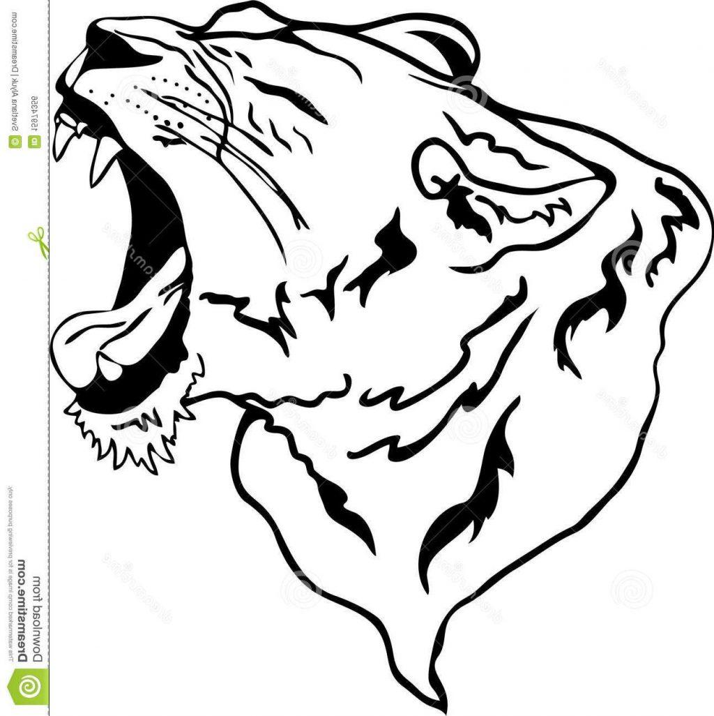 1024x1026 Hd Vector Lion Roaring Images