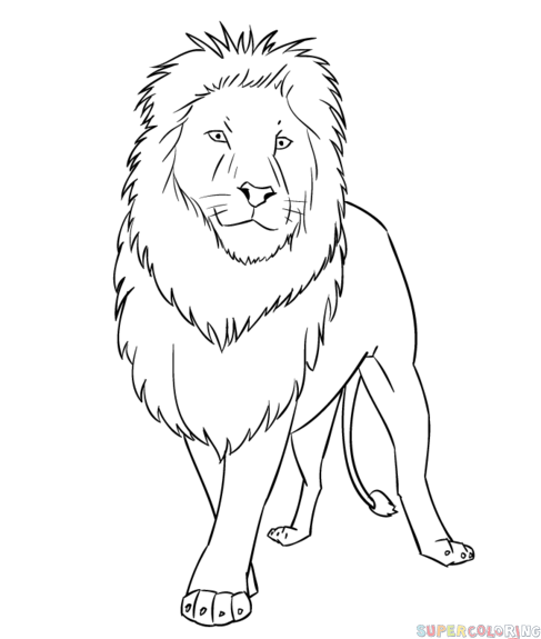 487x575 How To Draw A Roaring Lion Step Step Lion Drawing