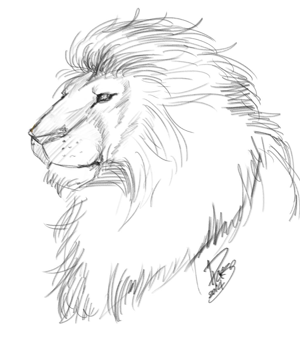 1024x1155 Lion Sketch By Dksk30