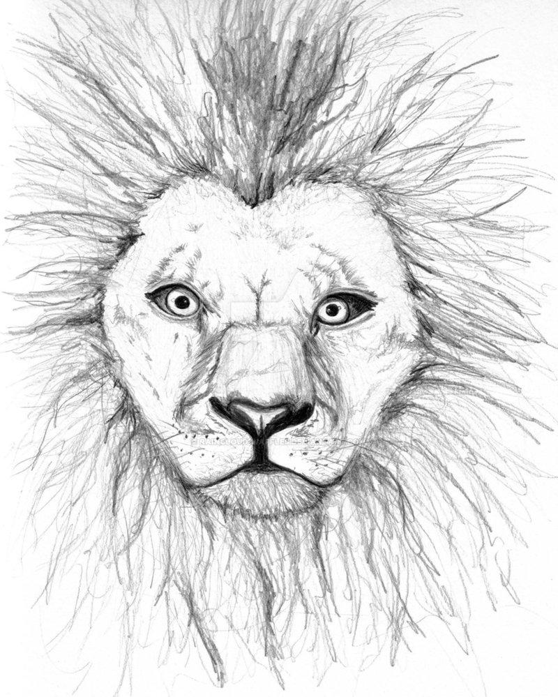 800x999 Lion Sketch By Raincloud Waffles