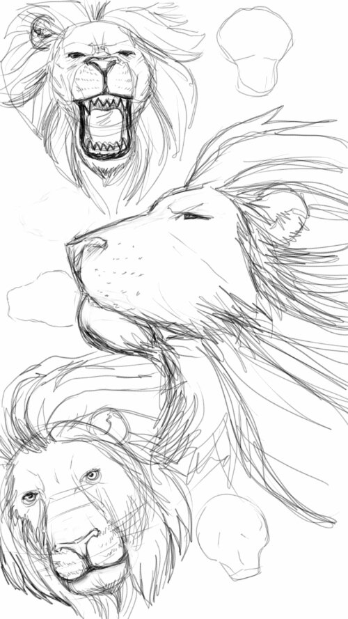 500x889 Lion Sketches Nguyening It !