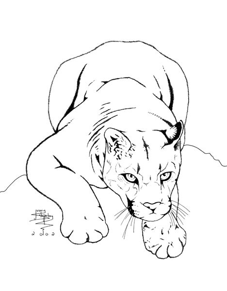 468x600 Mountain Lion Clipart Pencil Drawing
