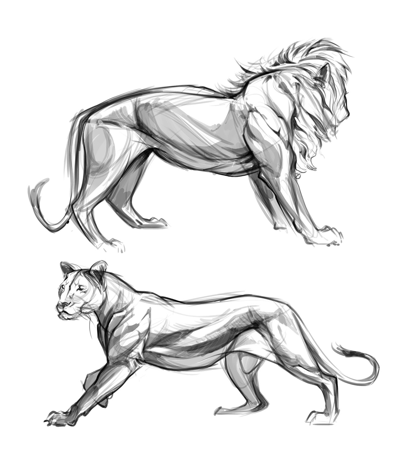 1380x1600 Lion Studies By Christian Bian Ceramic Animals