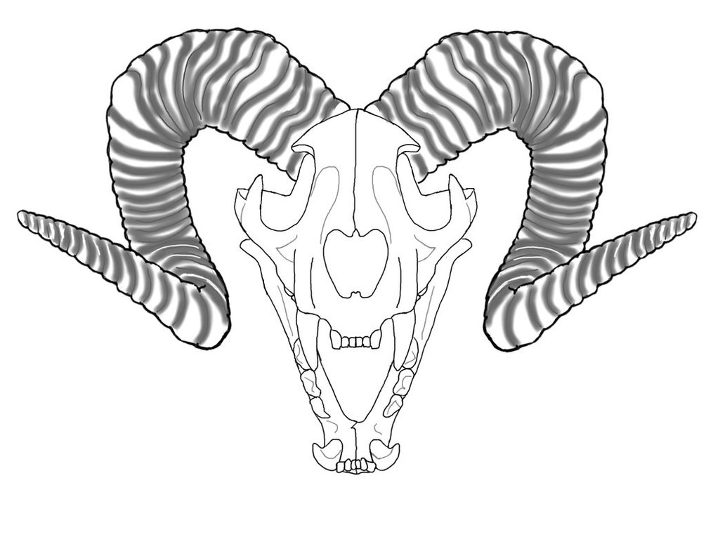 1005x795 Lion's Skull Outline Whorns Wip By Maccloy13