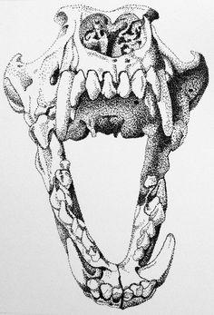 236x347 Not A Dinosaur But I Like The Skull