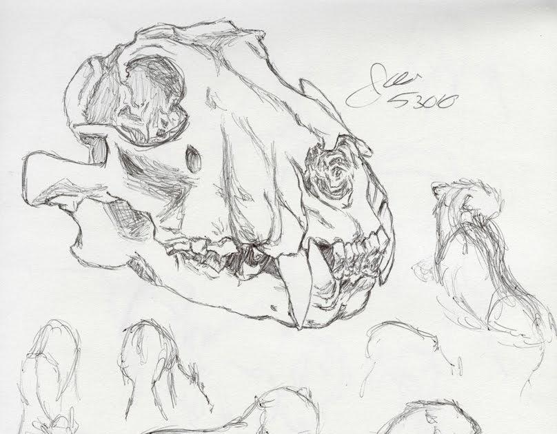 808x630 An Animator's Journey Trip To The Zoo